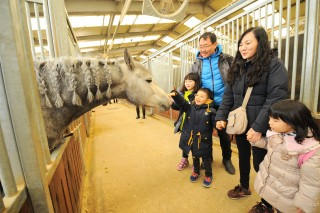 LetsRun Park in Korea makes efforts to popularize horse racing overseas