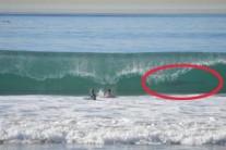 파도 속 식인 상어, 영화 죠스가 실제로? 공포