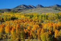 [양희관의 아름다운 세상]콘웨이 서밋의 가을단풍