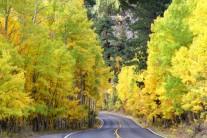 [양희관의 아름다운 세상] 시에라 네바다의 가을