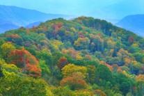 [양희관의 아름다운 세상]그레이트 스모키 마운틴의 가을