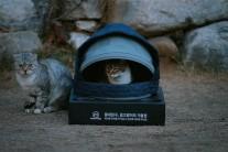 '후드하우스' 옷장 속 패딩이 길고양이 겨울집으로…