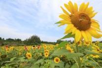제주 올 첫 장맛비…내주 25·26일 남부지방도 영향권