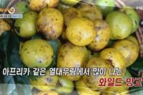 김세아 한 달 새 5.4kg 감량 비결…와일드망고 올바른 섭취법