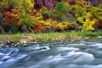 [양희관의 아름다운 세상] 가을이 흘러가는 자이언 국립공원
