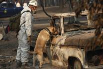 '역대 최악' 美캘리포니아 산불 사망 76명…실종 1천300여명