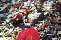 봄이 움트는 '남파랑길'을 거닐다