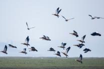 뉴질랜드에서 '장식용' 새들이 죽어 간다