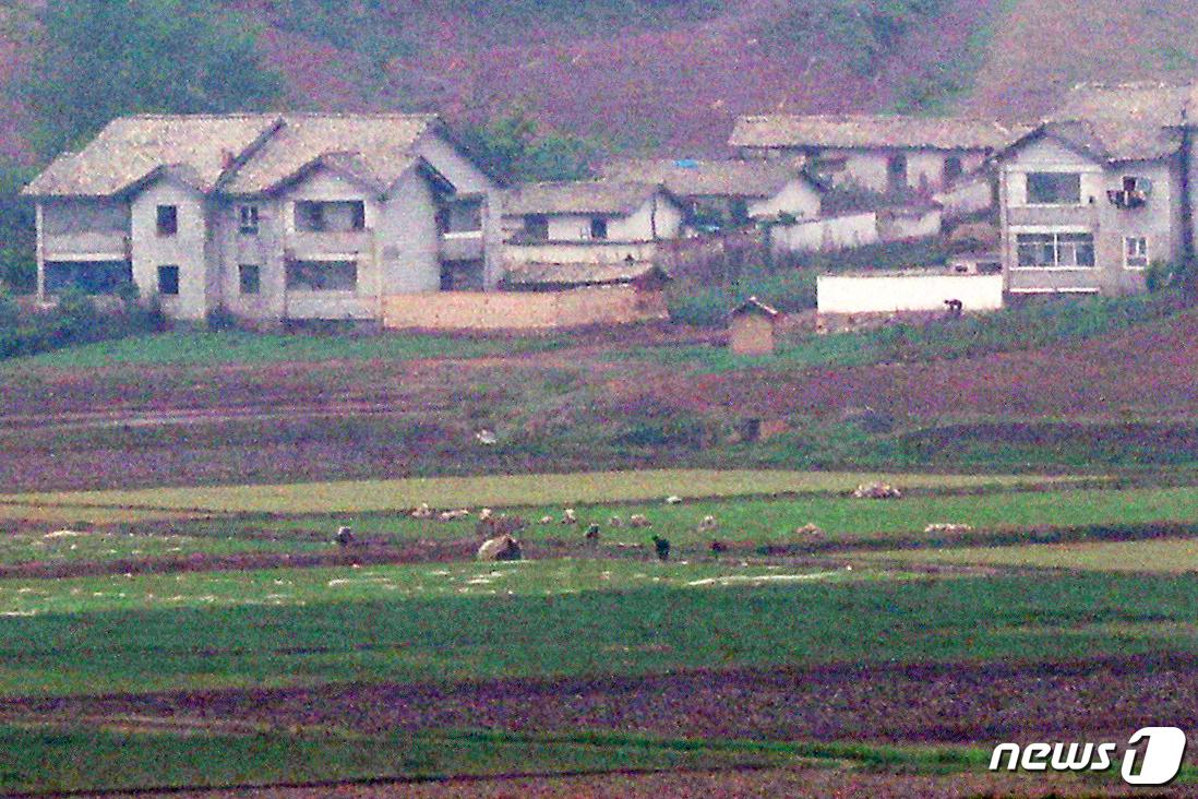 경기 파주 오두산전망대에서 바라본 북한 황해북도 개풍군 임한리 일대 논밭에서 북한 주민들이 농사일을 하고 있다.(뉴스 1)