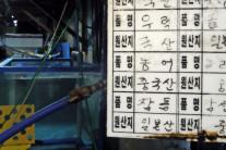 WTO 후쿠시마 판결에도…일본정부 대변하는 한국원자력학회