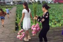 중국 생태공원, 주민들이 연꽃 싹쓸이해 결국 문 닫을 처지