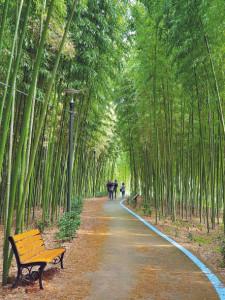 섬진강 대나무숲. [구례군청 제공]