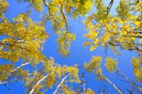 [양희관의 아름다운 세상] 콜로라도의 가을 하늘